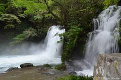 Cachoeira (eliseteshiraishi) Tags: rio gua japan natureza paisagem japo cachoeira izu kawazu riacho crrego  aoarlivre kawazucho cursodegua maio2012 prefeituradeshizuoka