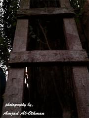 old ladder (Amjad Al-Othman~) Tags: old stair success amjad jodi سلم النجاح جودي العثمان امجاد سلالم ladeer