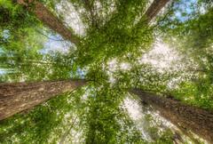 Corkscrew Swamp Sanctuary (Kristian Bell) Tags: trees sun 3 nature canon landscape woods bell florida mark wildlife iii swamp kris canopy kristian corkscrew sanctuary lightbeams 5dmk3