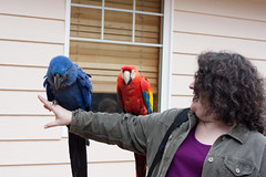 Me with Scarlet and Hyacinth Macaws (r.e.s) Tags: macaw scarletmacaw hyacinthmacaw zoologicalwildlifeconservationcenter