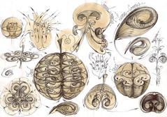 13 Sinteza manifestarea principiului sfera-vortex vegetal animal unde stationare (kelemengabi) Tags: vortex gabriel standing spiral wave theory sphere helix universal resonance kelemen