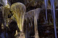 Cave Shields (San Francisco Gal) Tags: park nature landscape nevada formation national limestone shield cave stalagmite stalactite greatbasinnationalpark lehmancaves