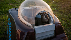 Hot Air Balloon Festival: Dog Saucer (Entropic Remnants) Tags: pictures photography photo image photos pics picture pic images photographs photograph remnants entropic