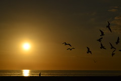 15704 (jordankatherine) Tags: ocean sunset sea orange sun beach water birds yellow seagull gulls horizon