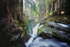 the downstream passage (manyfires) Tags: longexposure film analog forest landscape waterfall washington moss woods hike pinhole pacificnorthwest verdant lush pnw solducfalls innova6x9pinhole