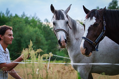 Sharing some stalks (rafax1977) Tags: light summer horses horse food pet pets man male smile grass animal canon mouth fun happy countryside funny warm day open close friendship feeding eating farm animallover teeth poland polish 7d brave closeness stalk bold stunned medow happieness canon70200f28 supprise suppriesed