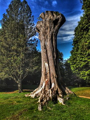 The King Has Lost His Crown (unfergiven65) Tags: tree buxton hdr