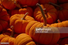 Pumpkins - Getty ID#567554075 (Little Hand Images) Tags: autumn fall halloween food pumpkins gettyimages