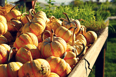 Squash & Pumpkin Season (どこでもいっしょ) Tags: autumn canada vegetables pumpkin colorful bokeh britishcolumbia farm squash langley ladner farmermarket orangecolor m43 inseason freshpicked mirrorless westhamislandherbfarm microfourthirds panasonicleicadgsummilux25mmf14 olympusomdem5