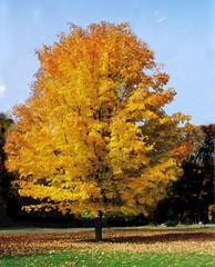yellow fall beauty