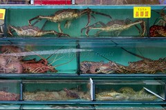 Lau Fau Shan Seafood 3 (l plater) Tags: china hongkong newterritories laufaushan