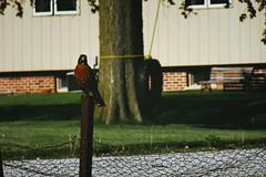 Hey, you. (jd231999) Tags: birds beady dainty birdbros