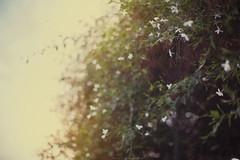 Narure (BbzzzZa) Tags: sunset sun white love nature beautiful canon spring bokeh mark moscow ff markii москва красиво природа весна цветы парк сад белый цветение боке пленэр