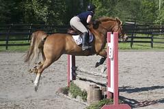 DSC_0349 (ifonlyfarm) Tags: show horse farm only if