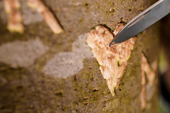 Week-21 Macro:Write (mschouten86) Tags: tree green love writing outdoor name knife carving hart ethernal