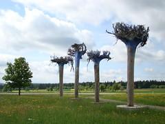 Up side down trees (Mieke Berkelaar2009) Tags: trees art schwarzwald lothar pfalzgrafenweiler