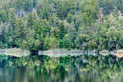 Reflejos en el lago Matheson (Andrs Guerrero) Tags: lagomatheson matheson mathesonlake newzealand nuevazelanda reflection reflejo westcoast oceana oceania reflejos revelar bosque lago lake agua espejo mirror