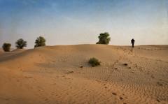 Dubai desert in color (Tiigra) Tags: dubai unitedarabemirates ae 2013 color landscape nature plant tree