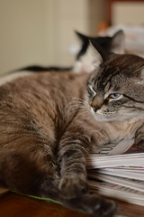 ecafoto16 distncia focal 2 (Capital da Bulgaria) Tags: ecafoto16 dof lente cat gato animal pet
