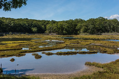 Rocky Neck State Park (billandkent) Tags: 2016 billcannon connecticut niantic eastlymeconnecticut nianticconnecticut rockyneckstatepark us usa unitedstates billandkent eastlyme statepark saltmarsh
