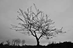 Arbre (Jordi sureda) Tags: trees monochrome blackandwhite blancoynegro nikon nature naturaleza nikkor negro arbres arboles simple d90 girona landscape jordisureda un minimal one oscuridad