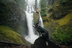 Falls Creek Falls (Justin Knott) Tags: falls creek nikon d800 washington waterfall outdoors dog border collie aussie pnw pacific northwest