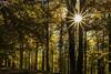 Sol en el bosque (Inmacor) Tags: inmacor sol hayedo otoño arboles tree sun light luz forest autumn troncos pirineos ltytr1