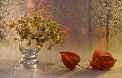 IMG_2826.jpg---hélios-40-2-85mm-1,5---amour-en-cage-et-hortensia--web (Monique J.) Tags: swirlybokeh bokehtournant hélios402 dryhydrangea hortensia naturemorte stilllife