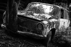 Lost in the woods [BE] (Dagelijksbrood) Tags: lostinthewoods 2016 belgium abandoned abandonedplaces car blackwhite bw noiretblanc monochrome neglected nikon nikkor g 35mm europe eerie exploration decay derelict verlaten demolished dark d3300 digital urbex urbandecay urbanexploration urbanexplorer forgotten flickr lostcar f18g spooky world woods lost outdoor blackandwhite