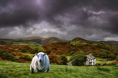 Green Green Grass of Home. (bainebiker) Tags: sheep farmhouse vally sky landscape mountains homestead grass canonef24mmf14liiusm hdr pennal gwyned walesuk