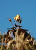DSC_2108 (PeaTJay) Tags: nikond70s reading lowerearley berkshire macro micro closeups gardens outdoors nature winter frost flora fauna plants flowers rose roses rosebuds