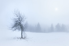 Lost (Radisa Zivkovic) Tags: winter mountain tree snow travel tara serbia wilderness high fog mist white woods landscape nature scenery outdoor minimalism branch sun