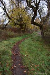 On the trail (JSB PHOTOGRAPHS) Tags: jsb9424 altonbakerpark eugeneoregon autzenstadium trail grass trees leaves autumn 2016 bridge d7100 nikon 18300mm