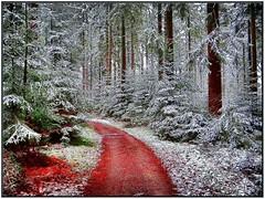 Welzheimer Wald (almresi1) Tags: tannen wald wood weg path winter snow schnee