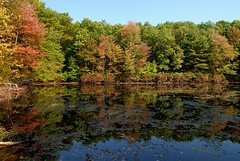 Fall color display beginning on Walden Pond (birdgal5) Tags: massachusetts middlesexcounty concord waldenpond fallcolor fallcolordisplaybeginning nikon d200 1755mmf28g 1755mmf28gdx