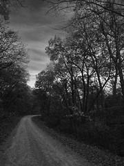Autumn road (momrunninglate) Tags: road countryroad dirtroad blackandwhite texture autumn trees kansas