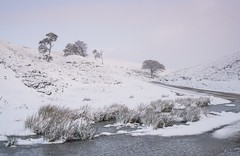 Frozen (.Brian Kerr Photography.) Tags: winter frozen cold coldmorning scotland sonyuk a7rii landscapephotography landscape slpoty snow scotspines trees ice leadhills