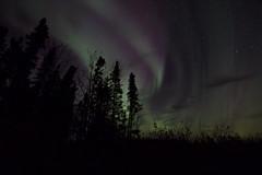 Aurora borealis (She Likes Odd) Tags: auroraborealis aurora northernlights northernmanitoba thompson manitoba canon60d canoneos60d canonphotography nightsky nightphotography astrophotography spaceweather boreal forest