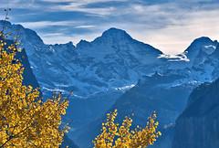 Lauterbrunnen , Murren, the walls of the Jungfrau mountain  , the summits of the Breithorn , the Tschingelhorn and the Gspaltenhorn.A view from Wengen. Canton of Bern, Switzerland.  No. 1348. (Izakigur) Tags: alps alpes alpi berner oberland bern berne ch canton d700 die schweiz europa feel lauterbrunnen wengen mrren breithorn tschingelhorn tree svizzera feelings emotions heart mother memories nikond700 nikkor2470f28 lasuisse laventuresuisse dieschweiz swiss suizo suisia suiza sussa switzerlnad schnee such berneroberland berna cantonofbern kantonbern jungfrau topf25 topf400 100faves 200faves 250faves