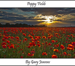 Poppy Field Sunset (gazjeavons) Tags: sunset red canon poppy poppies wildflowers poppyfields canoneos60d