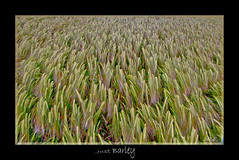 Just Barley :) (Nickerzzzzz :)) Tags: canonef70300mmisusm canon60d 1585isusm