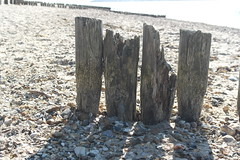 (Hollie Avalon) Tags: beach hampshire lepe