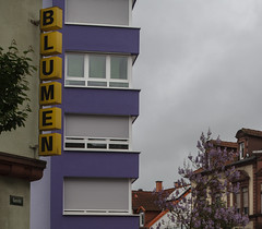 IP 174 | Blumen (-masru-) Tags: utata projects saturatedcolor projekte ironphotographer utata:project=ip174 somethingthatcomplementssomethinginthetext somethingwithtext ip174
