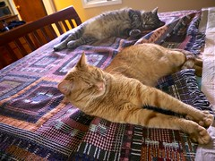Bed Hogs, June 05, 2013 (Maggie Osterberg) Tags: cats cat jackson fujifilm x20 maggieo ameliapond