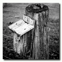 Circle if Life... #Wood #Post #Birdhouse #Sapling #BarbedWire #BandW #T2i #MaryvilleTn (his 2.0) Tags: square squareformat normal iphoneography instagramapp uploaded:by=instagram