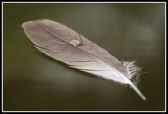 Photo of 169. Feather. 18-06-2013