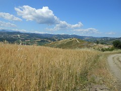 periferia scandianese (SergioBarbieri) Tags: appenninoreggiano cereali nuvolebianche sentierospallanzani collinascandianese bottegaro periferiascandianese