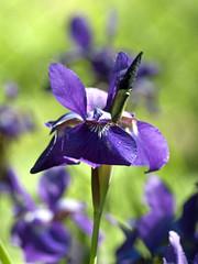 Flowers 06-06-2011 13