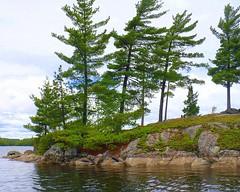 1020 (Marbeck53) Tags: trip travel trees vacation lake ontario canada nature water landscape island scenery rocks panasonic boulders shrubs redcedarlake dmclz7 marbeck53 markriesenbeck