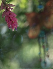 ~ Relax ~ (Shelby's Trail) Tags: tree lady butterfly backyard wind bokeh bloom airplant shady chime inmy eightdaysaweek twtme bokehwednesday